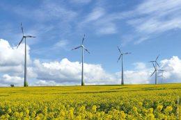 Windräder auf einer grünen Wiese mit gelben Blumen