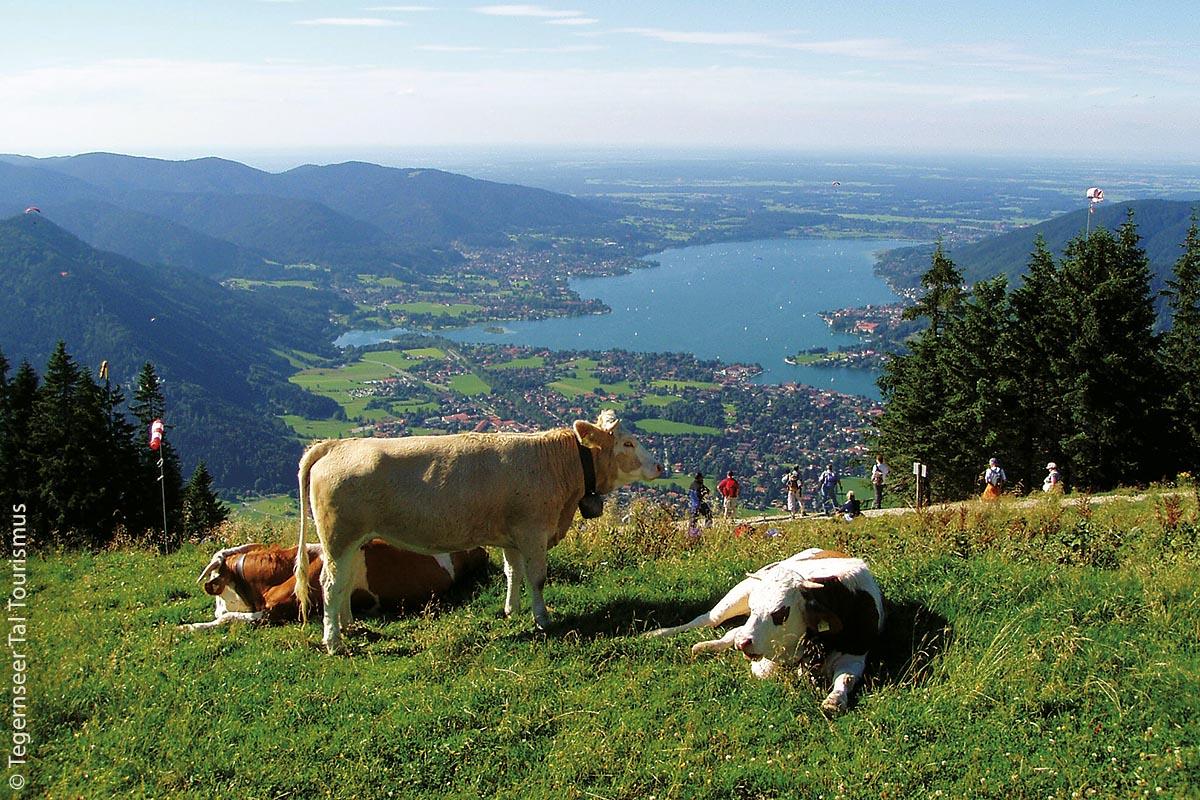 Blick vom Wallberg auf das Tegernseer Tal