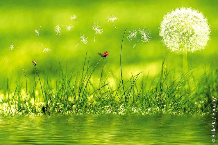 """Grün in die Stadt: Mit einem Förder-Check unterstützt die Initiative """"Grün in die Stadt"""" kommunale Entscheider dabei, die für sie passenden Förderprogramme zur Grünentwicklung schnell und unkompliziert zu finden."""