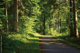 """Die bayerische Forstwirtschaft ist Spitzenreiter """"Im Holz liegt die Zukunft"""""""