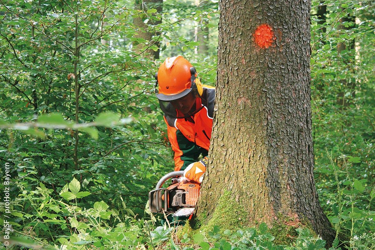 Forstwirt bei der Holzernte