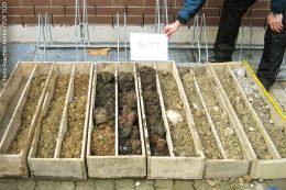 Bohrprofil, das von der Geländeoberkante (rechts oben im Bild) bis in eine Tiefe von etwa elf Metern reicht. In den rot-grauen Schichten ist Bauschutt enthalten. Schwarze Verfärbungen weisen auf organische Verbrennungsrückstände hin.