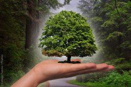Bundesumweltministerium baut Förderung für Klimaschutz in Kommunen stark aus