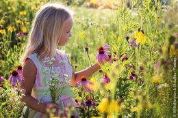 Eine kunterbunte Wiese mit allerlei Wildblumen, in der sich auch eine faunische Vielfalt wohlfühlt, gehört heutzutage nur noch selten zur deutschen Kulturlandschaft. Daher macht es Sinn, jede noch so kleine Nische mit Wildblumen zu bepflanzen.