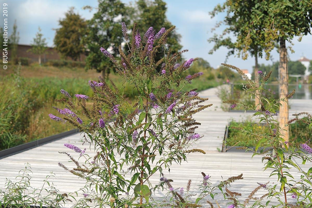 Viele Pflanzen und Bäume, auch diese am Holzsteg im Neckaruferpark, wurden oft schon vor ein, zwei Jahren gesetzt.