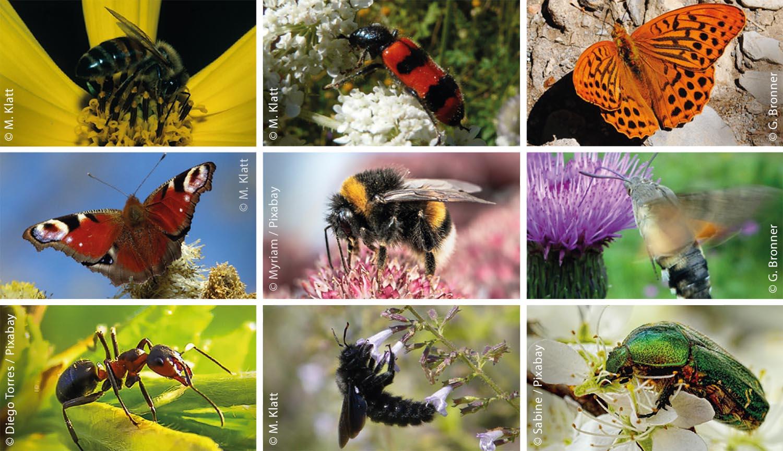Ob Honig- oder Wildbiene, Schmetterling, Käfer, Ameise oder Fliege – für die Bestäubung unserer Nutz- und Wildpflanzen benötigen wir sie alle. Jeweils von links nach rechts sind in der obersten Reihe zu sehen: Honigbiene, Buntkäfer, Kaisermantel; In der mittleren Reihe: Tagpfauenauge, Erdhummel, Taubenschwänzchen; In der unteren Reihe: Rote Waldameise, Holzbiene, Rosenkäfer;