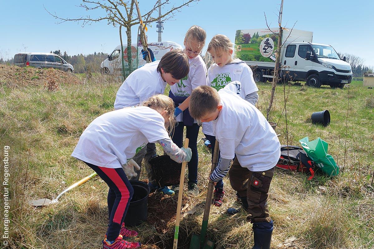 In Teamwork pflanzten die Schüler die Obstbäume.