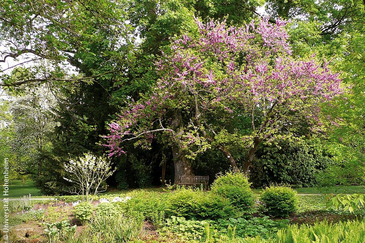 Parkbänke laden in dem grünen und blühenden Ambiente der Hohenheimer Gärten zum Ausruhen und Schauen ein.