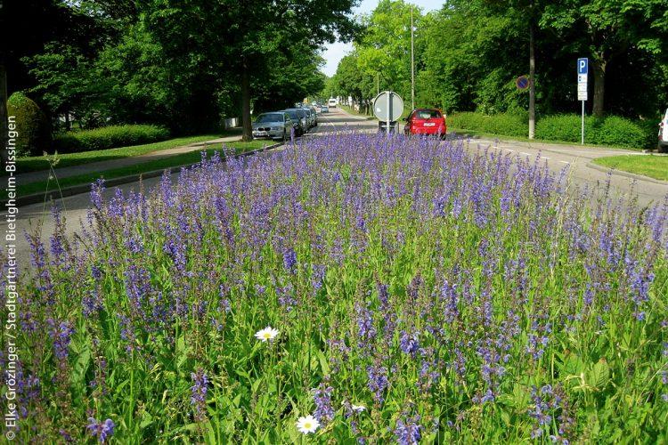 Um die Artenvielfalt bei Insekten und anderen Kleinlebewesen zu erhalten, werden zunehmend auf Verkehrsinseln Wildblumen ausgesät. Das baden-württembergische Ministerium für Verkehr hat sogar einen Wettbewerb gestartet, um die Bürger, Städte und Gemeinden für dieses Projekt zu begeistern.