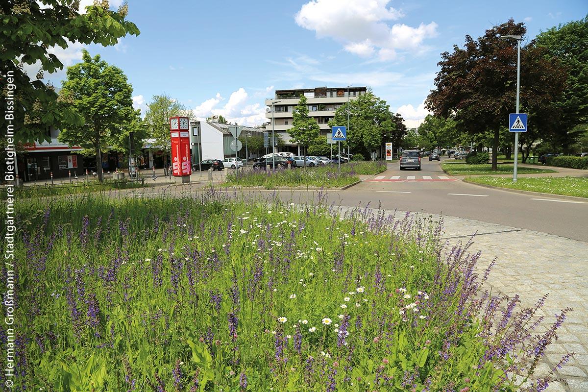Naturnahes Verkehrsgrün am Kreisverkehr Buchstraße in Bietigheim-Bissingen: Insekten besuchen die zweischürigen Salbeiwiesen sehr gerne.