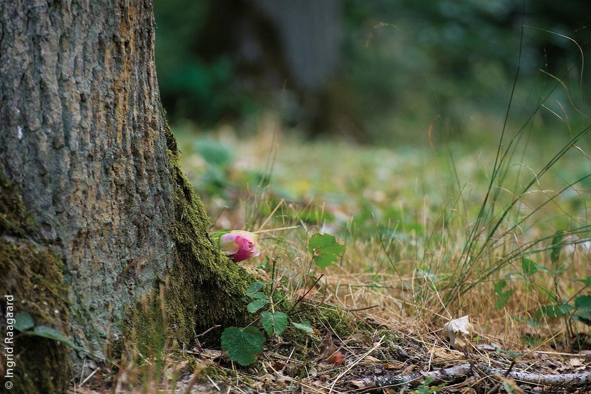 Und obwohl nicht gestattet, sieht man hin und wieder kleine Blumengrüße an Bäumen.