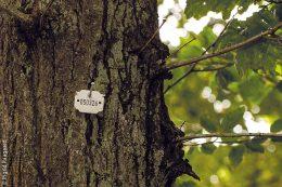 Die als Bestattungsbäume vorgesehenen Bäume sind mit Kennzahlen nummeriert.