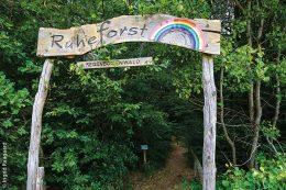 Der Regenbogenwald ist eine Bestattungsstätte für verstorbene Frühchen und Neugeborene.