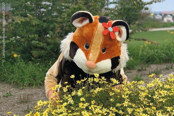 Der Feldhamster Fips ist das Maskottchen der Landesgartenschau Ingolstadt, das die Blütenpracht im Nordwesten von Ingolstadt präsentieren wird.