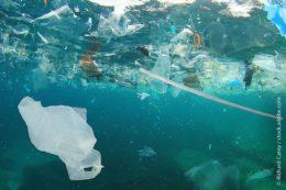 Bilder, die unser Gewissen geprägt haben: Plastikmüll im Ozean. Obwohl nach Expertenmeinung nicht der private, sondern eher der gewerbliche Plastikmüll Verursacher der Vermüllung unserer Meere ist, entbrannte eine rege Diskussion um das geplante Verbot von Einkaufstüten aus Kunststoff.