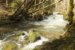 Die Hauensteiner bzw. Obere Murg kommt aus dem Hotzenwald und mündet bei Murg (Lkr. Waldshut) in den Hochrhein.