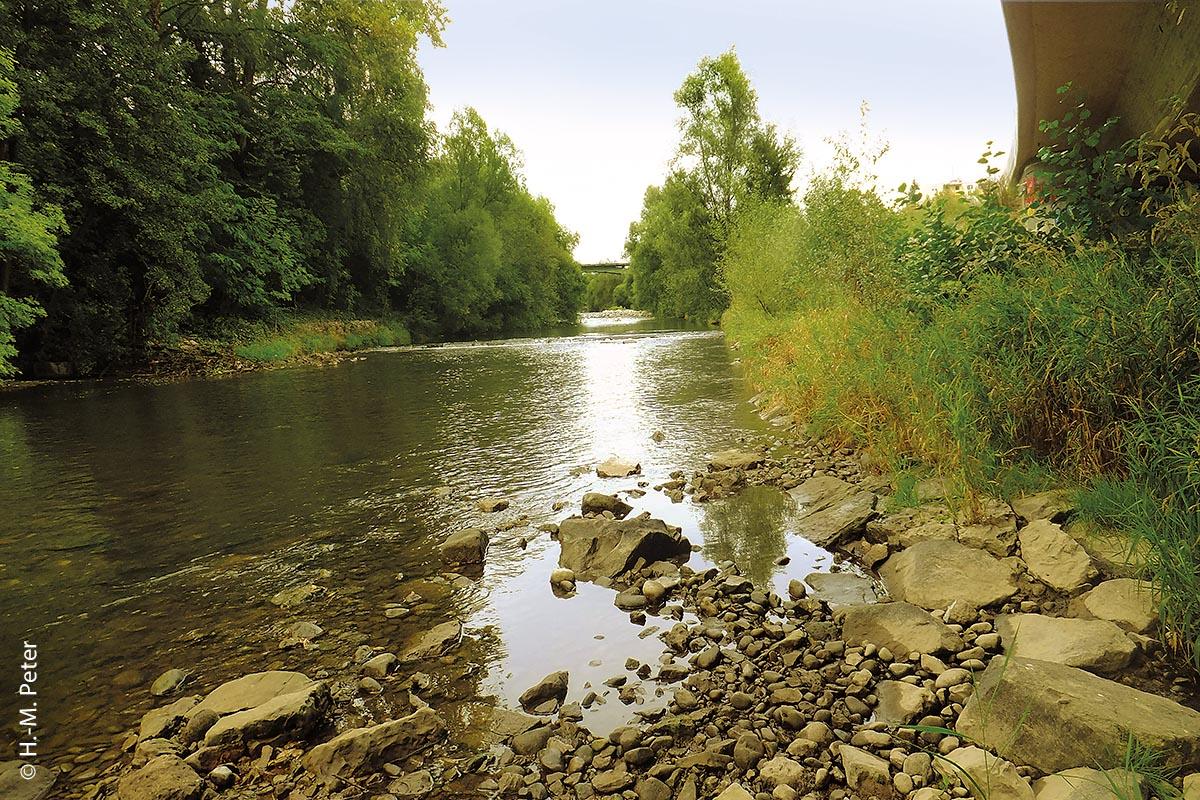Einer der Zuflüsse aus dem Südschwarzwald in den Hochrhein ist die Wiese: Gezeigt wird hier der Unterlauf der Wiese bei Lörrach, an der Grenze zur Schweiz.