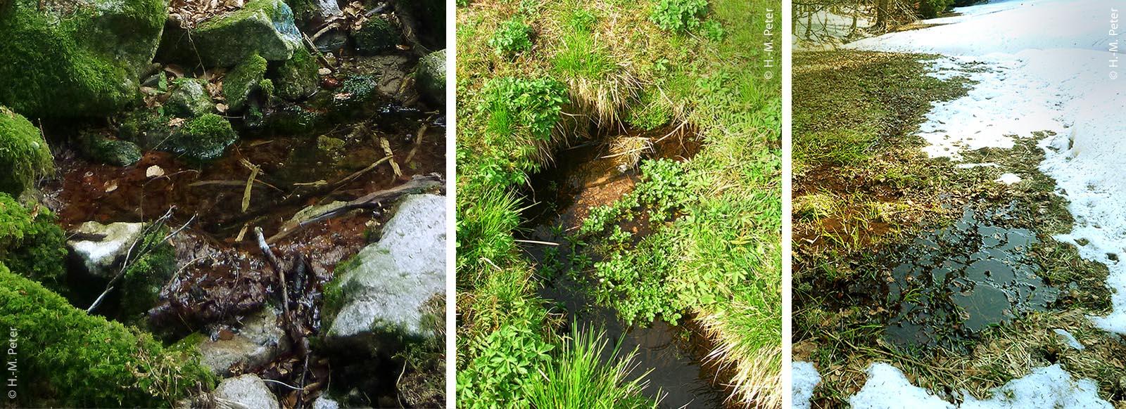 Quellen bei Herrischried (Lkr. Lörrach) bilden unter anderem Zuflüsse zur Oberen Murg: Die Schwandquelle (links) tritt an mehreren Stellen frei aus, die Rohrmoosquelle (Mitte) ist eine typische Wiesenquelle und die Möslequelle durchnässt und sickert durch eine größere, teils sumpfige Fläche.