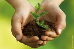 Aus heimischem Gartenabfall, Pflanzenschnitt und organischem Abfall kann ökologisch wertvoller Kompost hergestellt werden.