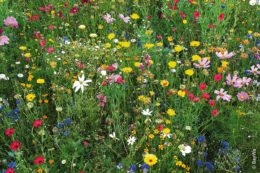 BayWa vertreibt Sir-Graham-Produkte: Das Blumenparadies – nach der Rezeptur der artenreichen Veitshöchheimer Sommerblumenmischungen – setzt farbenfrohe Akzente.