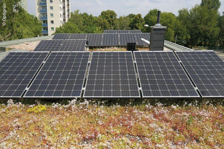 Ein Solargründach in Berlin-Spandau: Die Kombination von Gründach und PV-Anlage erhöht die Lebensdauer von Flachdächern.