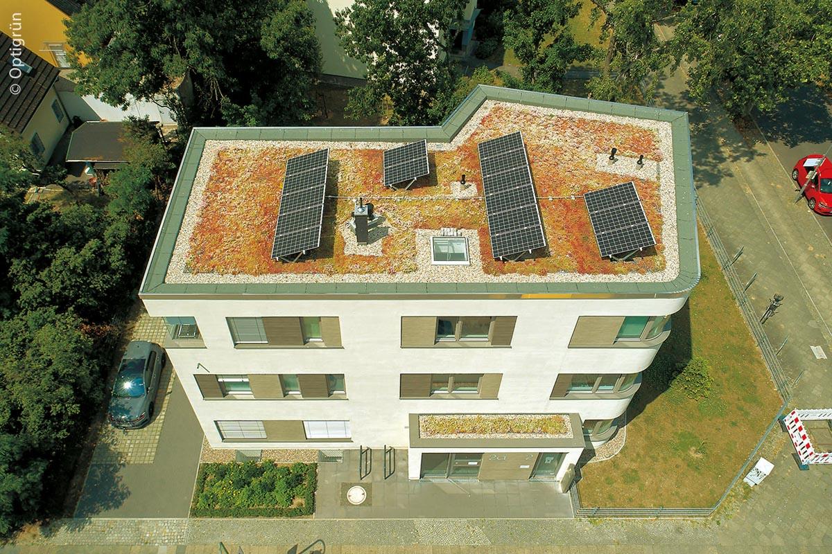 Begrünte Dächer schaffen einen gewissen Ausgleich für den Verlust grüner Flächen, der durch Bebauungen verursacht wird.