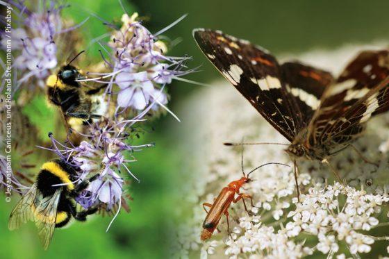 Eine der wichtigsten Aufgaben weltweit ist es, die Artenvielfalt zu erhalten, auch die bei Insekten und Wildblumenpflanzen. Baden-Württemberg hat jene Gemeinden und Städte in seinem Bundesland ausgezeichnet, die besonders viel für den regionalen Artenschutz tun.