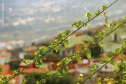 """Zu den drei nominierten Projekten gehört die """"Urban Pergola"""", eine Idee, die von vier jungen Forschern der Hochschule Bremerhaven entwickelt wurde. Vorbegrünte Pflanzennetze sollen Städte in einen Großstadtdschungel verwandeln und dabei vor allem das sommerliche Hitzeproblem lösen."""