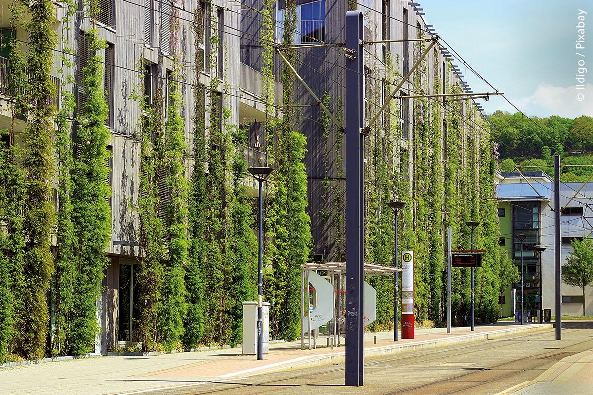 Vorreiter Freiburg: Begrünungen an Fassaden verhindern eine starke Aufheizung.