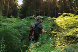 Wälder bieten viel Entspannung. Besonders seit Beginn der Pandemie stellen das Waldbesucher fest. Und im Bienwald im südlichen Rheinland-Pfalz westlich von Karlsruhe gibt es für Natur- und Kunstliebhaber so einiges zu entdecken.