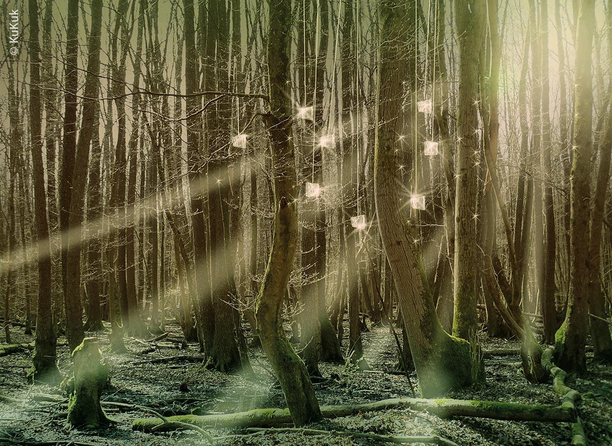 Eine noch nicht realisierte Idee für den Pfad: An Ästen hängende Spiegelstücke reflektieren das Sonnenlicht im morgendlichen Nebelwald.