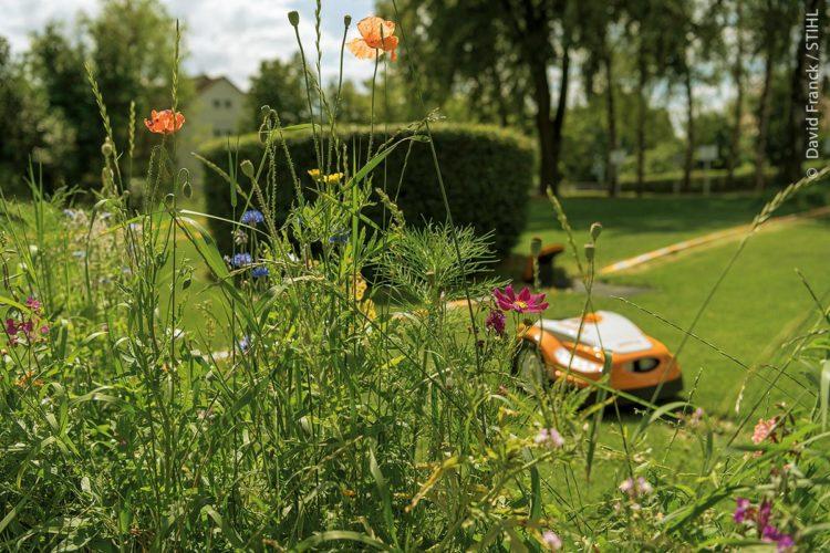 Insekten- und Pflanzenvielfalt versus Rasenmähen: Sind diese beiden Grundsätze vereinbar? Eine Studie lässt hoffen.