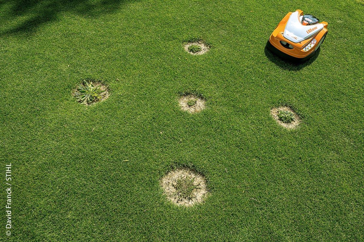 Für die Studie wurden kreisrunde Flächen aus dem Rollrasen ausgestochen und darin typische Rasenkräuter eingesetzt.